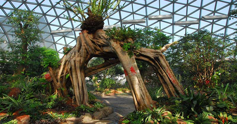 Chenshan-Botanical-Garden-