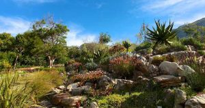Kirstenbosch-