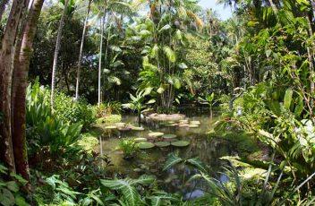 Botanical-botany