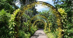 site-news-Singapore-Botanic-Gardens