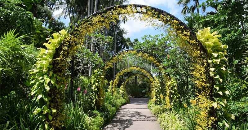 site-news-Singapore-Botanic-Gardens